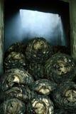 在黑暗的龙舌兰酒细节 免版税库存照片