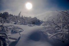在黑森林的高度的冷的冬日 库存照片