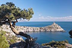 在黑海岩石海岸的杜松结构树  库存照片