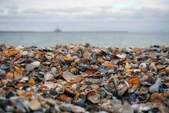 在黑海的壳 图库摄影