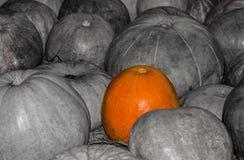 在黑白中的突出的明亮的南瓜 构造在灰色背景秋天标志的明亮的南瓜 库存图片