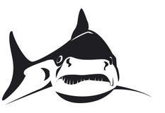 在黑白传染媒介的恼怒的鲨鱼 免版税图库摄影