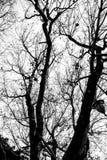 在黑白的光秃的树枝 库存照片