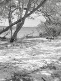 在黑白的桑迪小海湾 免版税库存照片