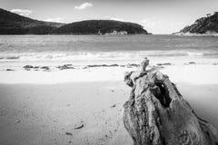 在黑白的海滩的漂流木头 图库摄影