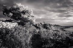 在黑白的美丽的自然和风景照片在亚得里亚海的接踵而来的风暴在克罗地亚 免版税库存照片