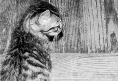 在黑白的逗人喜爱的小的猫 免版税库存照片