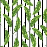 在黑白背景的绿色香蕉叶子 无缝的模式 向量 图库摄影