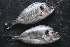 在黑石桌上的新鲜的海鲷 免版税库存照片