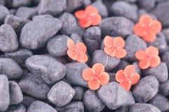 在黑禅宗石头的橙色Ixora花 库存照片