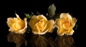 在黑背景和他们的反射的三朵黄色玫瑰 库存图片
