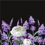 在黑背景植物的花海报的淡紫色牡丹现实模板您的样品文本的 免版税图库摄影