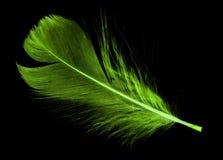 在黑背景的一根绿色羽毛 免版税库存照片