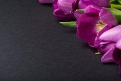 在黑背景的五颜六色的春天郁金香花 复制空间 在黑色隔绝的五桃红色郁金香 免版税库存照片