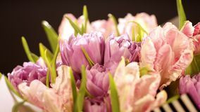 在黑背景的浅粉红色的郁金香 桃红色郁金香花束在黑背景的 从卷曲的美丽的花束 股票录像