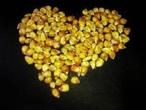 在黑背景的种子玉米 免版税库存图片