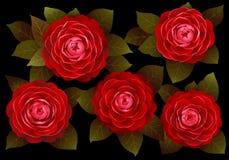 在黑背景的红色山茶花花 库存图片