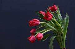 在黑背景的红色郁金香花 免版税库存图片