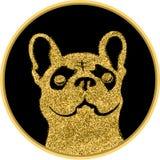 在黑背景的金黄牛头犬 金狗 库存照片