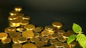 在黑背景的金黄硬币 财务事务,投资,想法的货币,财富的成功,开户概念 股票视频