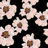 在黑背景隔绝的野花牡丹花无缝的样式 库存例证