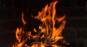 在黑背景,野火,森林火灾,火的篝火发火焰 库存图片