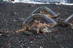 在黑色沙子海滩的绿浪乌龟 图库摄影