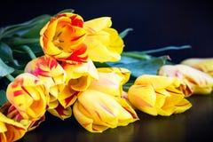 在黑色的五颜六色的郁金香 库存照片