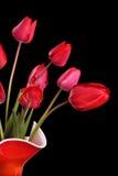 在黑色的红色郁金香 免版税图库摄影