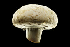 在黑色背景查出的湿蘑菇 免版税库存照片