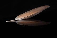 在黑色背景的美丽的羽毛 库存图片