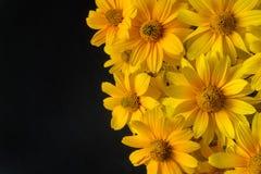 在黑色背景的黄色花 免版税库存图片
