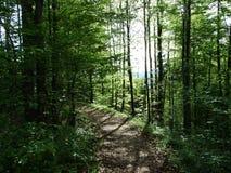 在黑里绍小行政区附近外阿彭策尔州,瑞士城市的春天落叶林 库存图片
