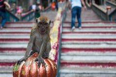 在黑风洞附近的一只猴子在吉隆坡 免版税库存图片