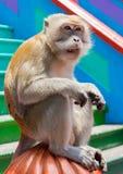 在黑风洞附近的野生短尾猿猴子 免版税库存照片