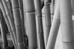 在黑&白色的厚实的竹子 库存图片