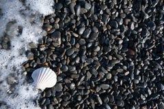 在黑Pebble海滩的白色壳有波浪的 免版税库存图片