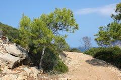 在龙海岛,马略卡,西班牙,欧洲上的杉树 库存照片