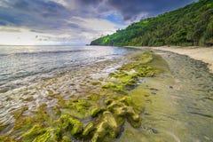 在龙目岛海滩,印度尼西亚的岩石青苔 免版税图库摄影