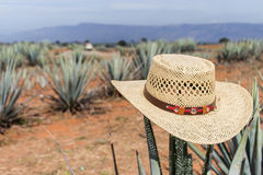 在龙舌兰的阔边帽 在仙人掌的帽子 免版税库存照片