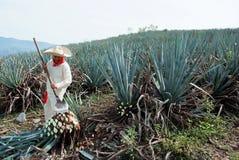 在龙舌兰酒产业的人工作 免版税库存照片
