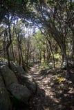 在登上克拉伦斯顶部的一条神秘的道路在阿尔巴尼 免版税库存图片