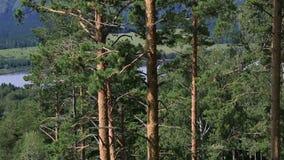 在登上浅Sinyuha山坡的美好的植被。 股票视频
