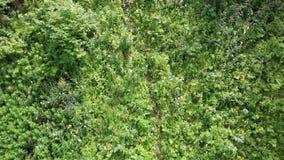 在登上浅Sinyuha山坡的美好的植被。 股票录像