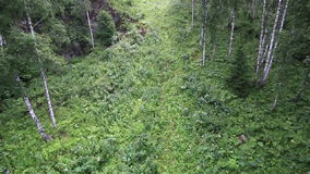 在登上浅Sinyuha山坡的美好的植被 影视素材