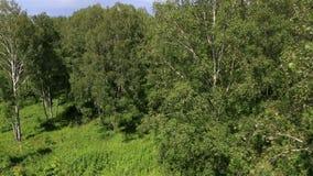 在登上浅Sinyuha山坡的美好的植被 股票录像