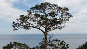 在水上的唯一杉木树 库存照片