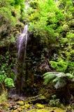 在登上里士满森林公园的瀑布 库存照片