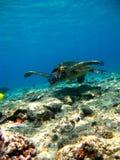在水下的乌龟飞行 免版税库存图片