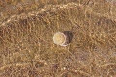 在水下的壳在含沙底部 图库摄影